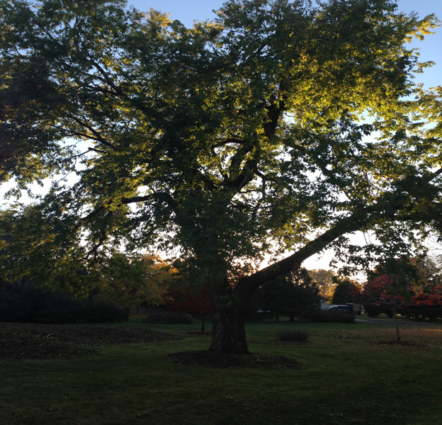 donovan-arborists-denver-co-fertilizing-trees-in-late-fall